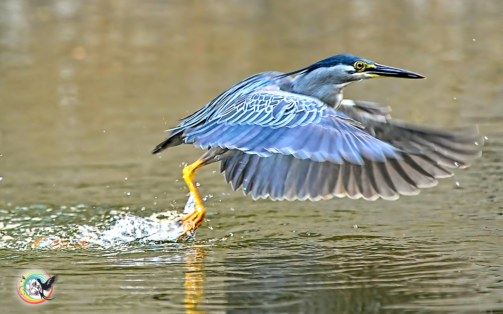 Photograph Little Heron by Andy Fu on 500px
