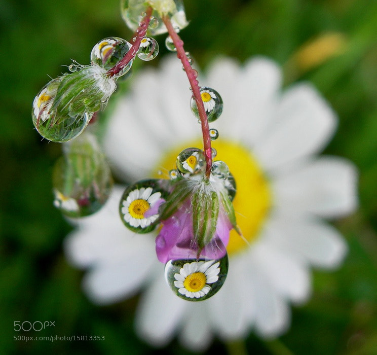 Photograph drops by tugba kiper on 500px