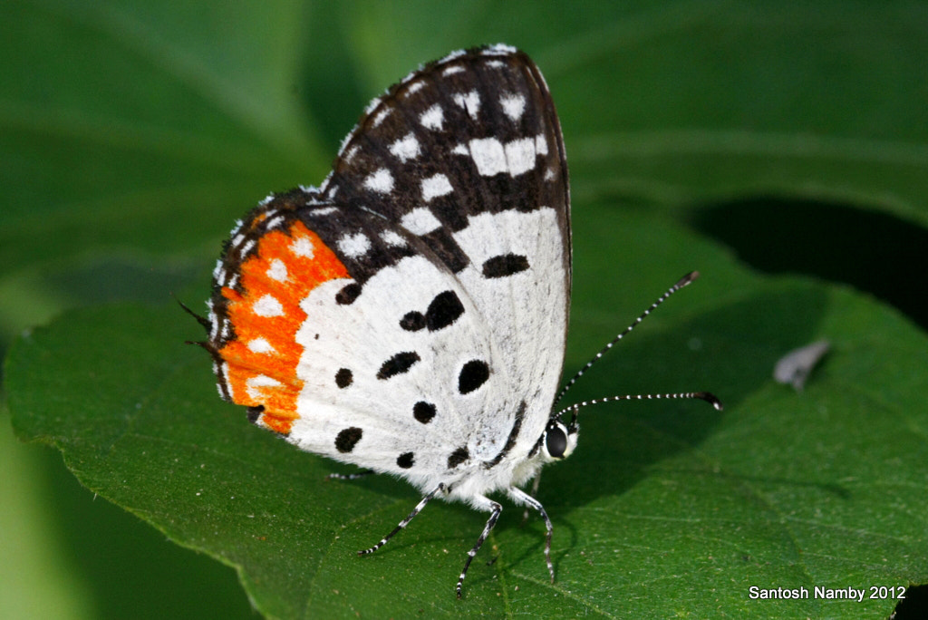 Photograph Red Pierrot by Santosh Namby on 500px