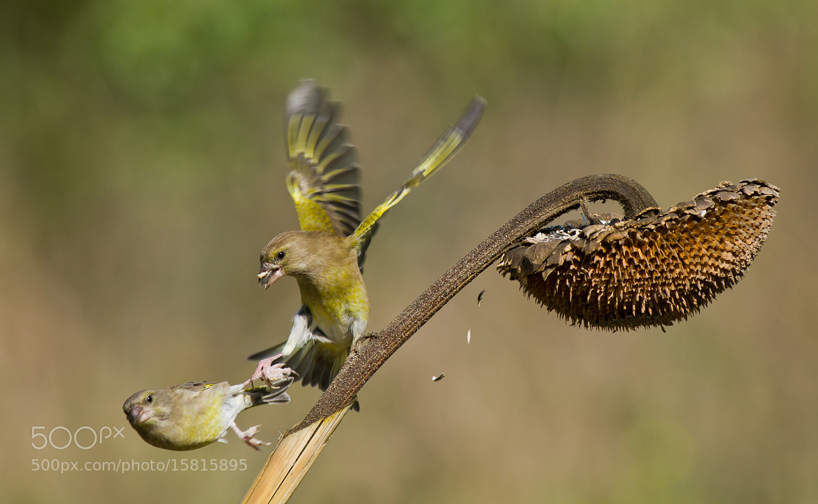 Photograph Fight by Alfredo Fanciullacci on 500px