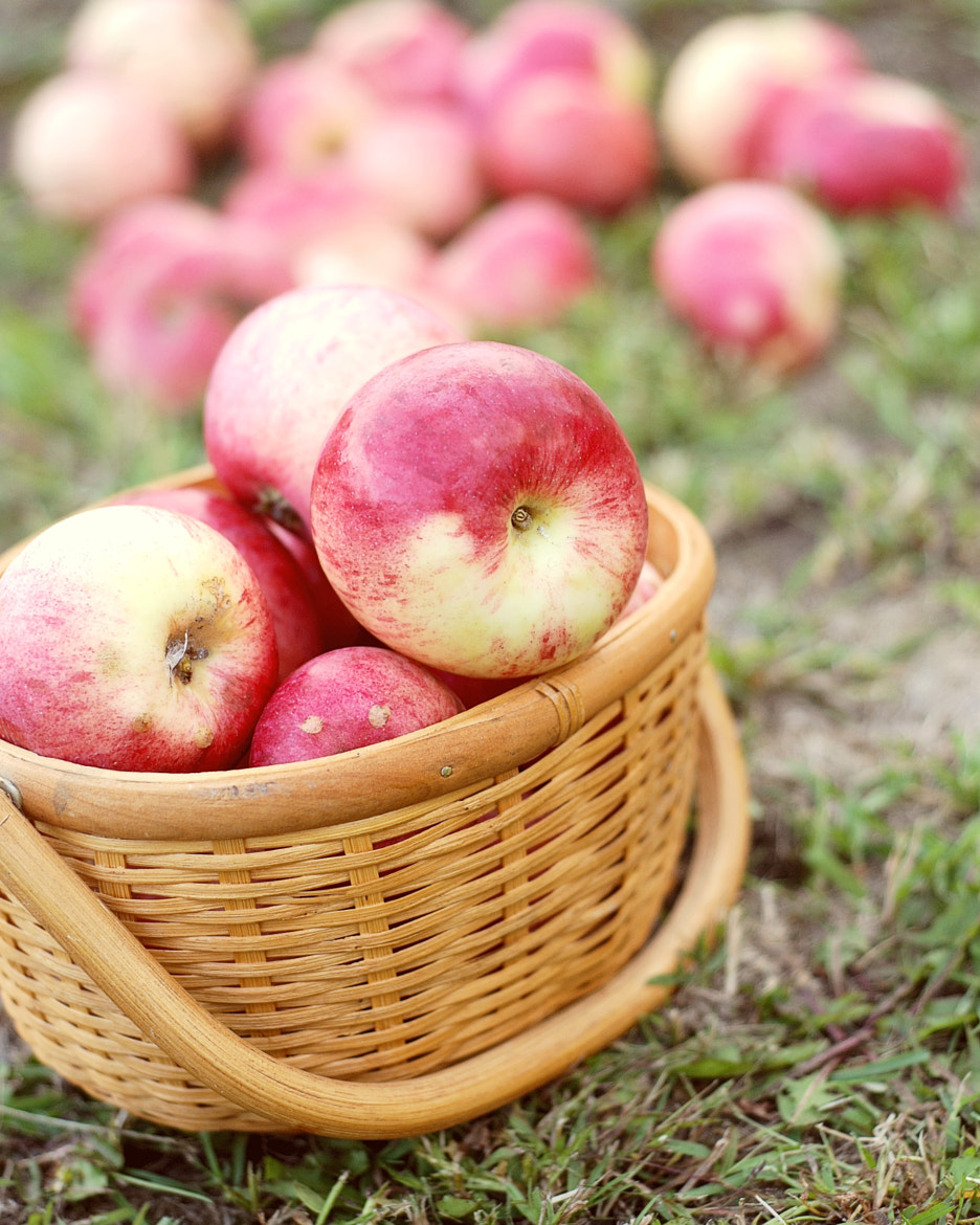 Photograph Apples in a Basket by Erica Kastner on 500px