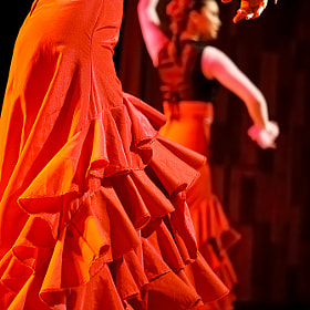 Flamenco by Paulo Capiotti (capiotti)) on 500px.com