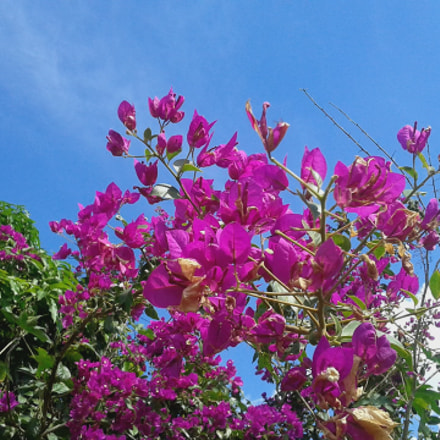 Flowers in the sky, Samsung Galaxy S3 Slim