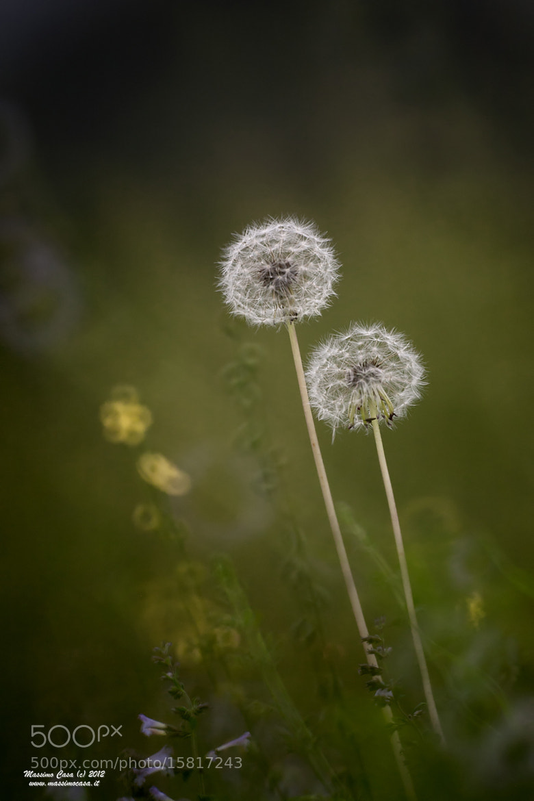 Photograph Ca-Taraxacum by Massimo Casa on 500px