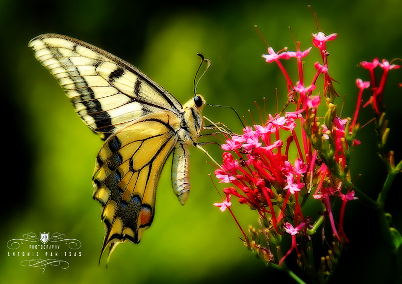 Photograph Butterfly effect by Antonis Panitsas on 500px