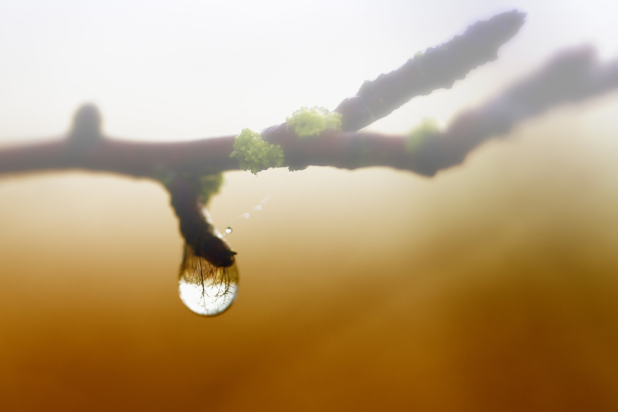 Photograph Water Droplet in Branch by Xavier Wiechers on 500px