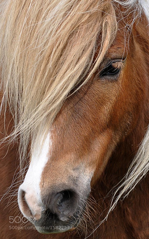 Photograph Portrait by Bjarne Klarskov on 500px