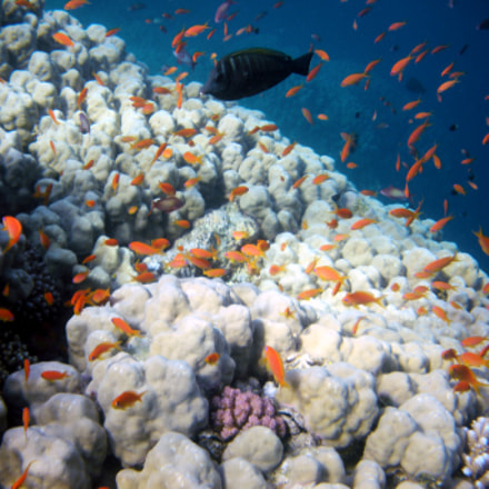 Red sea Fishes and, Nikon COOLPIX S560