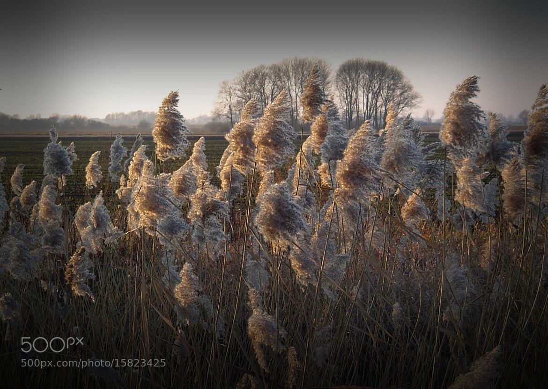 Photograph Nature by Wojciech Kobus on 500px