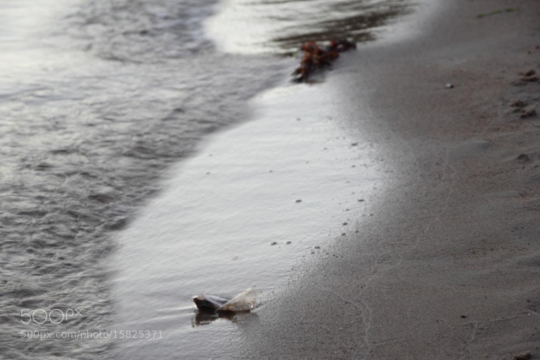 Photograph Beach by Daniel Arntzen on 500px