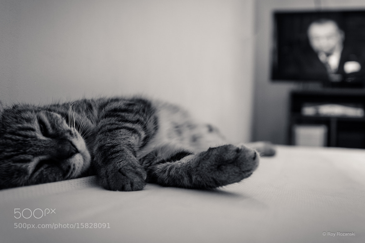 Photograph I'm Easy Like Sunday Morning  by Roy Rozanski on 500px