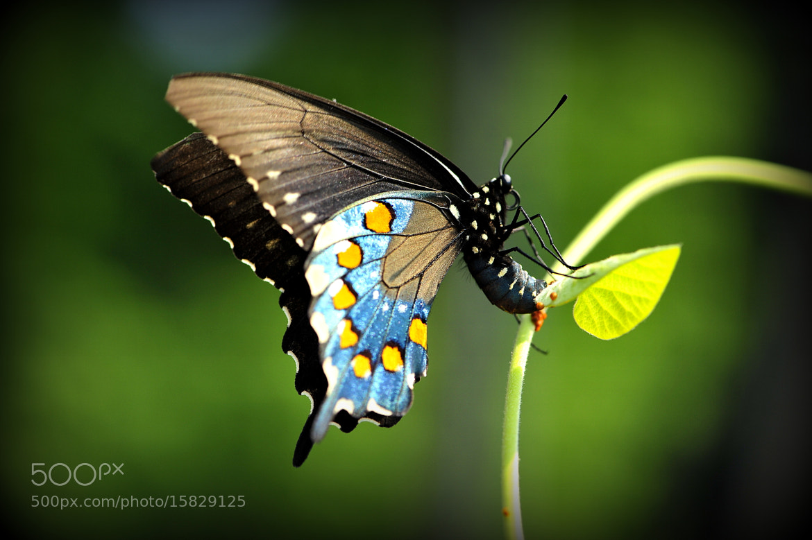 Photograph Butterfly Creator by Joseph Broyles on 500px