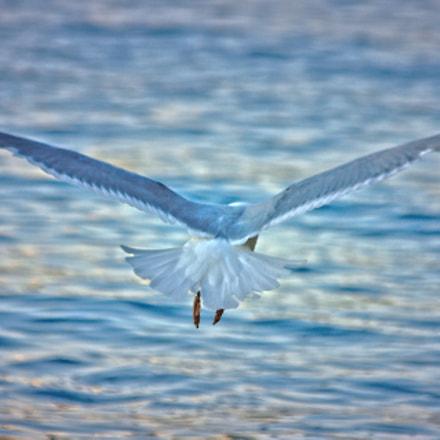 Bye Bye Seagull