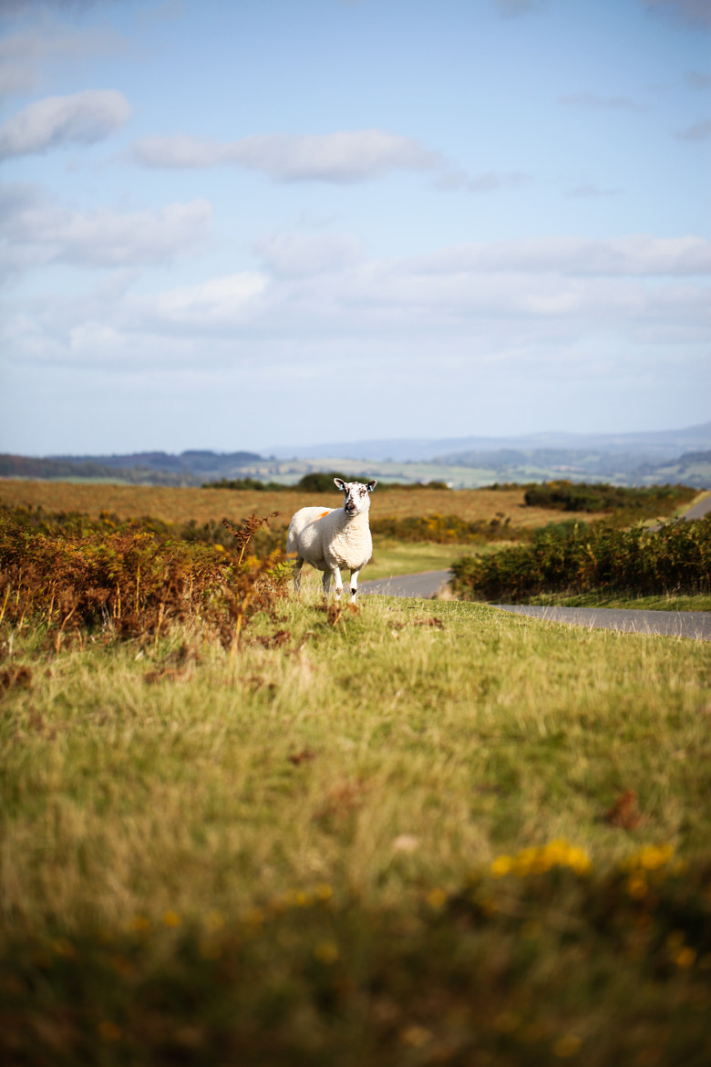 Photograph Welcome to Wales by Naomi Turner on 500px