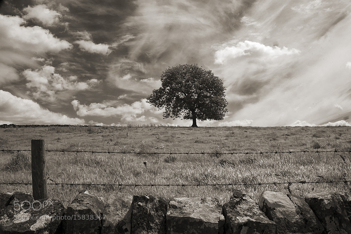 Photograph Lonely Tree by Magdalena Warmuz-Dent on 500px