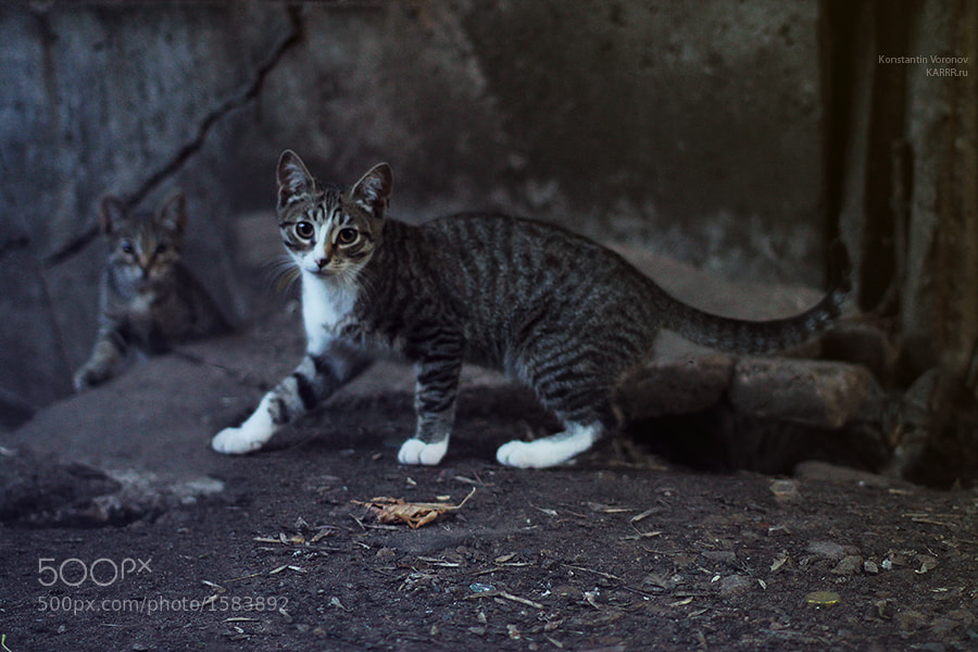 Photograph 3 Cats by Konstantin Voronov on 500px
