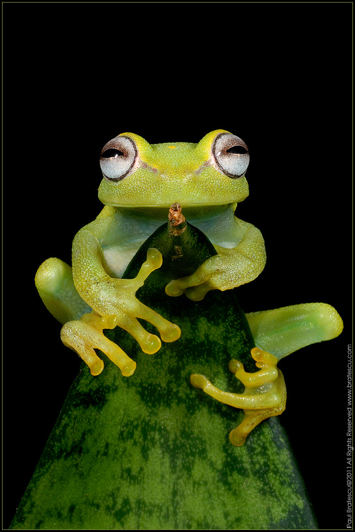 Photograph Ribbit Rider by Paul Bratescu on 500px