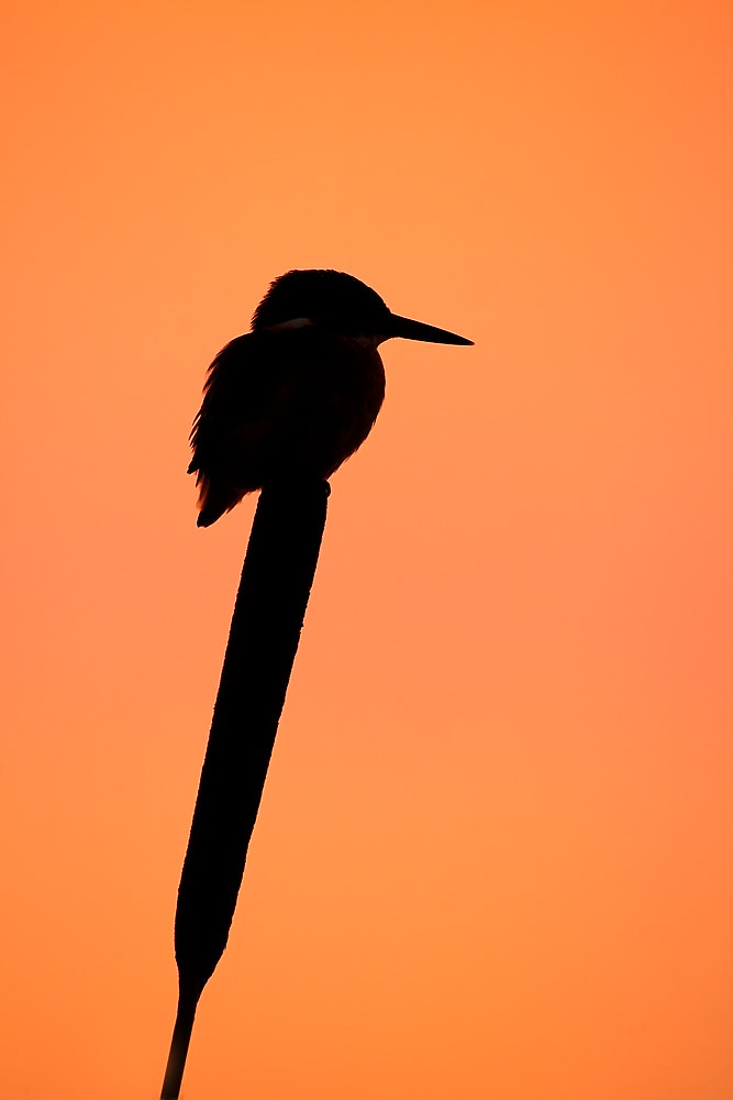 Photograph silhouette by Dale Sutton on 500px