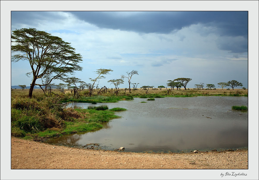 Serengeti landscapes №4