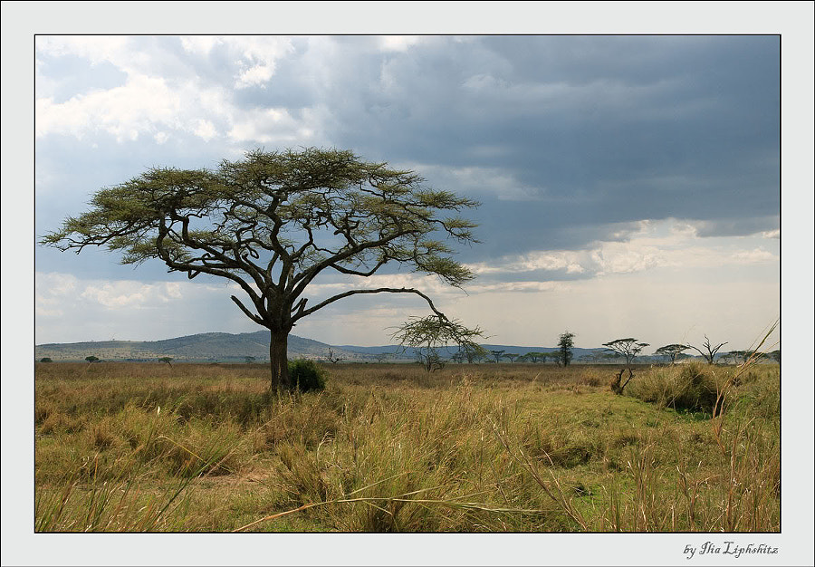 Serengeti landscapes №5