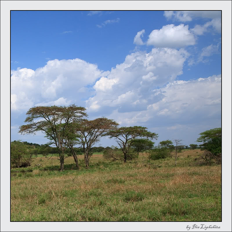 Serengeti landscapes №6