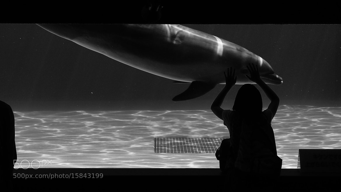 Photograph ふれあい Contact  by TOS1963 on 500px
