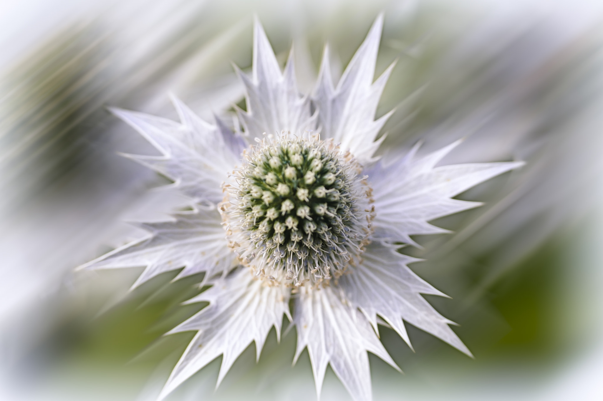 Photograph White Flower by Xavier Wiechers on 500px