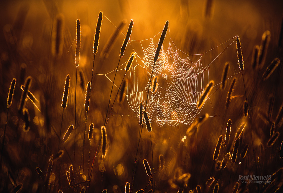 Photograph Cobweb by Joni Niemelä on 500px