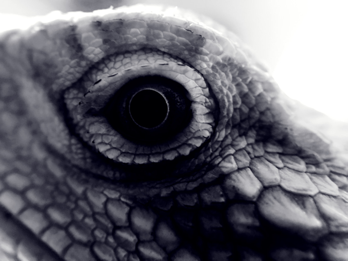 Eye of the Dragon by Adam Caudill on 500px.com