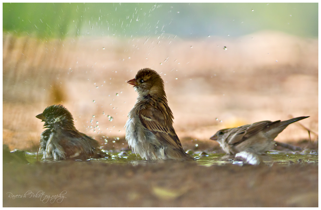 Photograph Its shower time!  by Raveesh Raveendranath on 500px