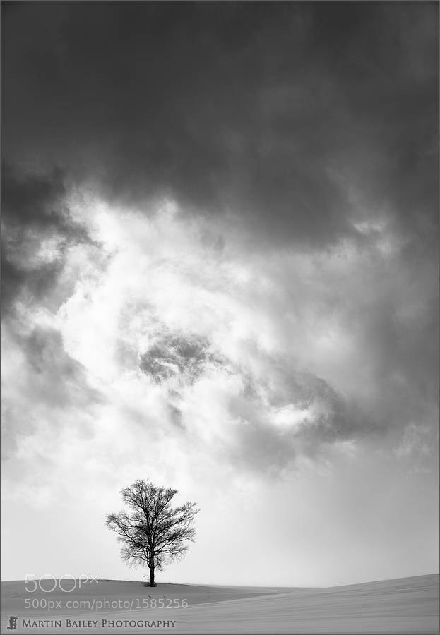 Photograph My Favourite Biei Tree by Martin Bailey on 500px