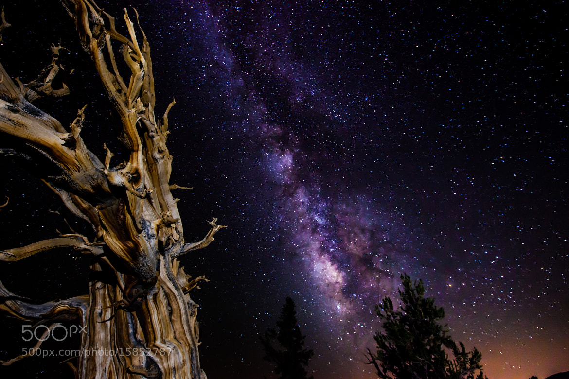 Photograph Ancient Bristlecone - Milky Way by Jarod Pace on 500px