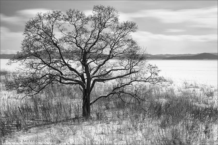 Photograph Saroma Lake Tree by Martin Bailey on 500px