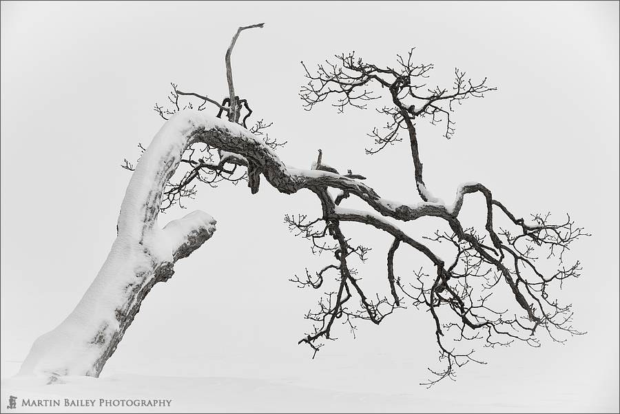 Photograph Kussharo Lake Tree by Martin Bailey on 500px