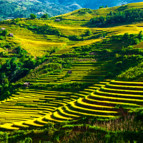 Terraced fields in Mù Cang Chải district by Amateur Pic (AmateurPic)) on 500px.com