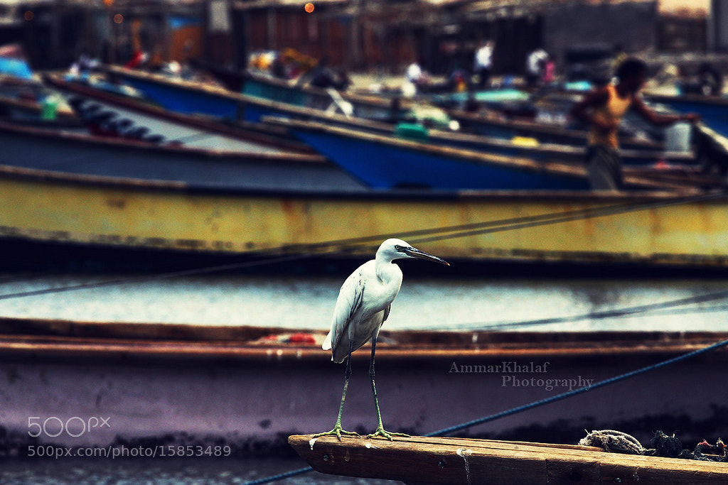 Photograph Untitled by Ammar Khalaf on 500px
