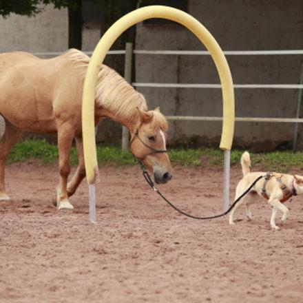 Horse and Dog Agilitiy