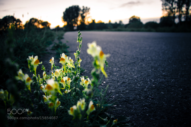 Photograph Asphalt flowers by Bart Bollen on 500px