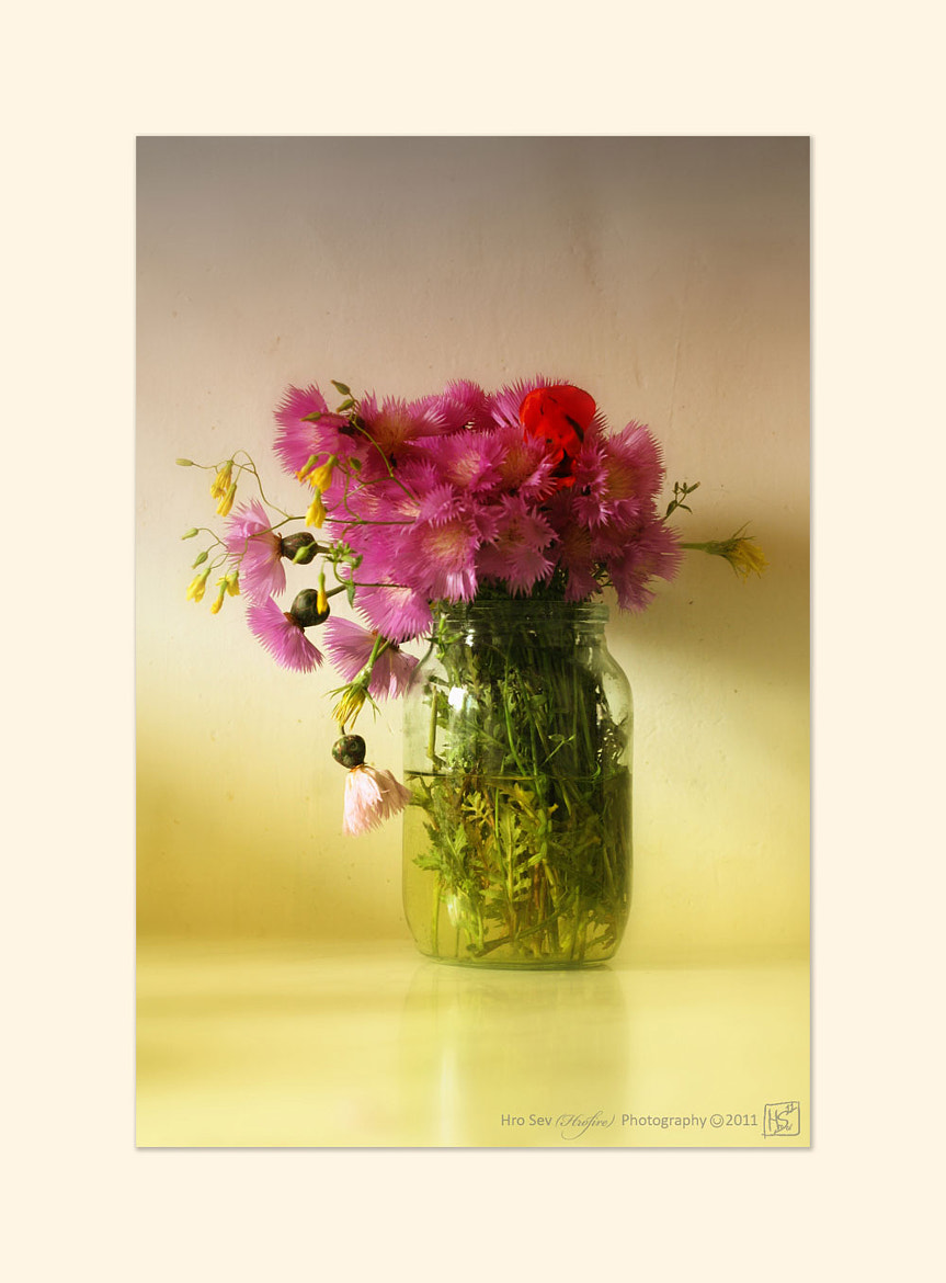 Photograph Flowers by Hro Sev on 500px
