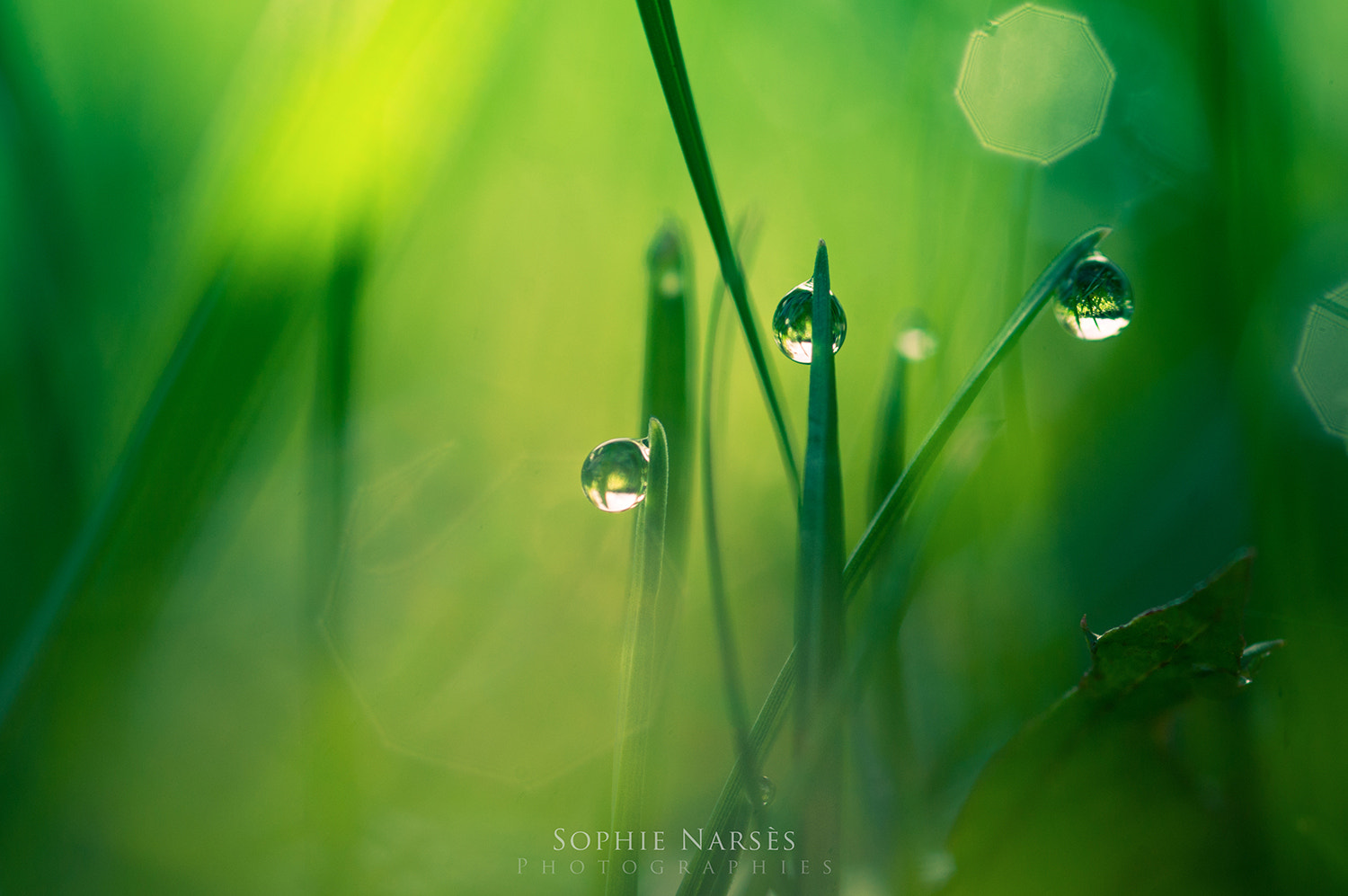 Photograph Over the hill by Sophie Narses on 500px