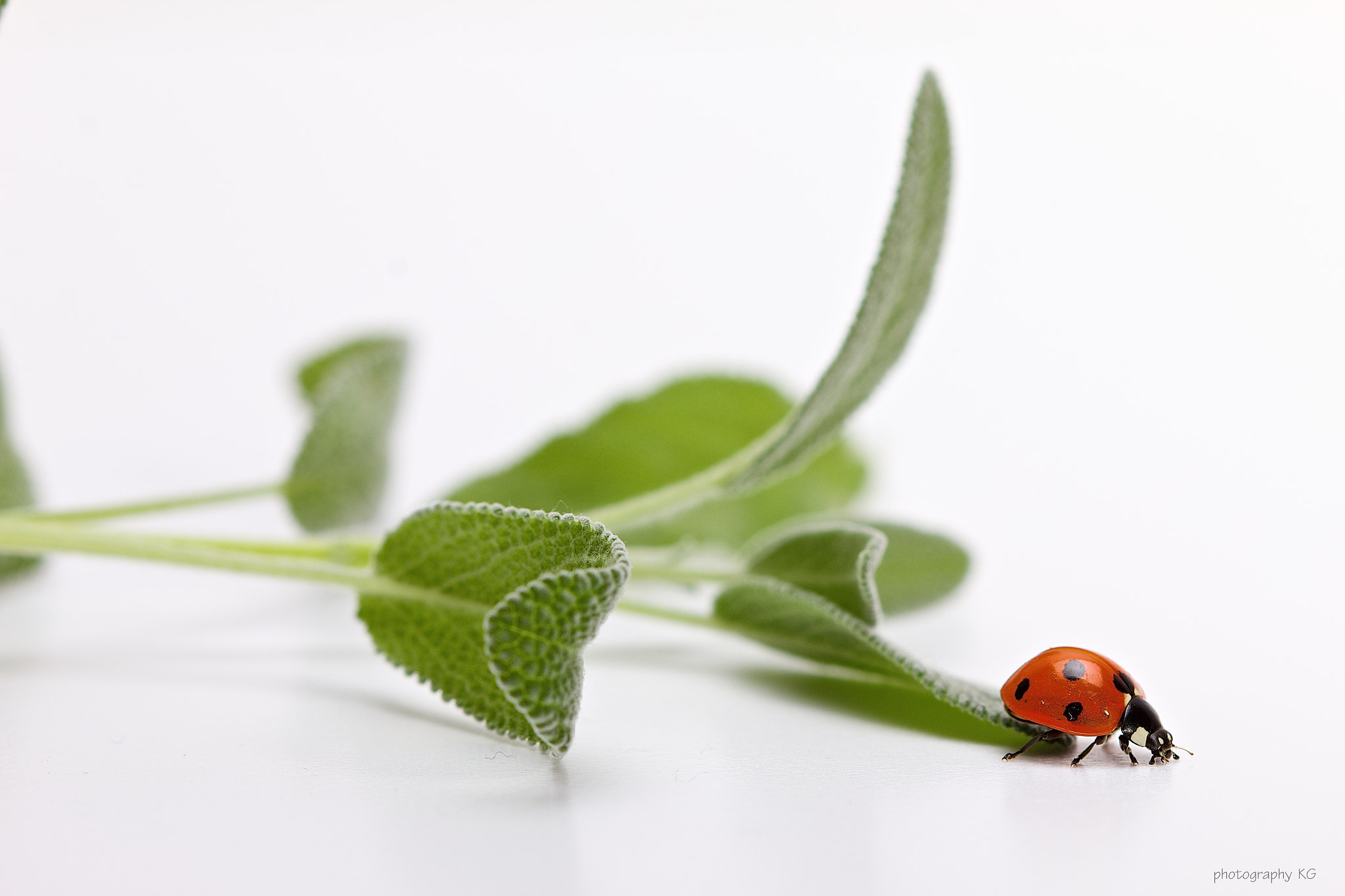 Photograph Ladybug by Katrin Gerchel on 500px