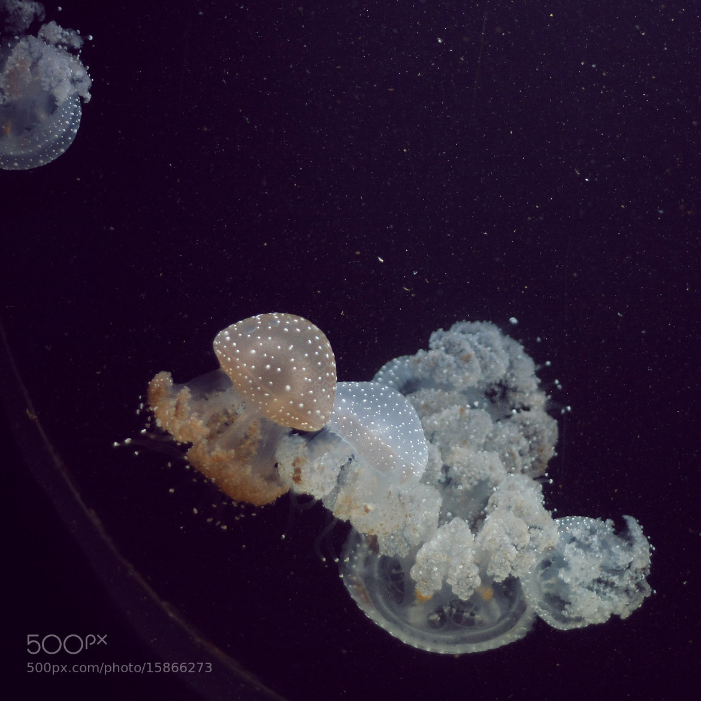 Photograph Jellyfish by Anastasia Tretyakova on 500px
