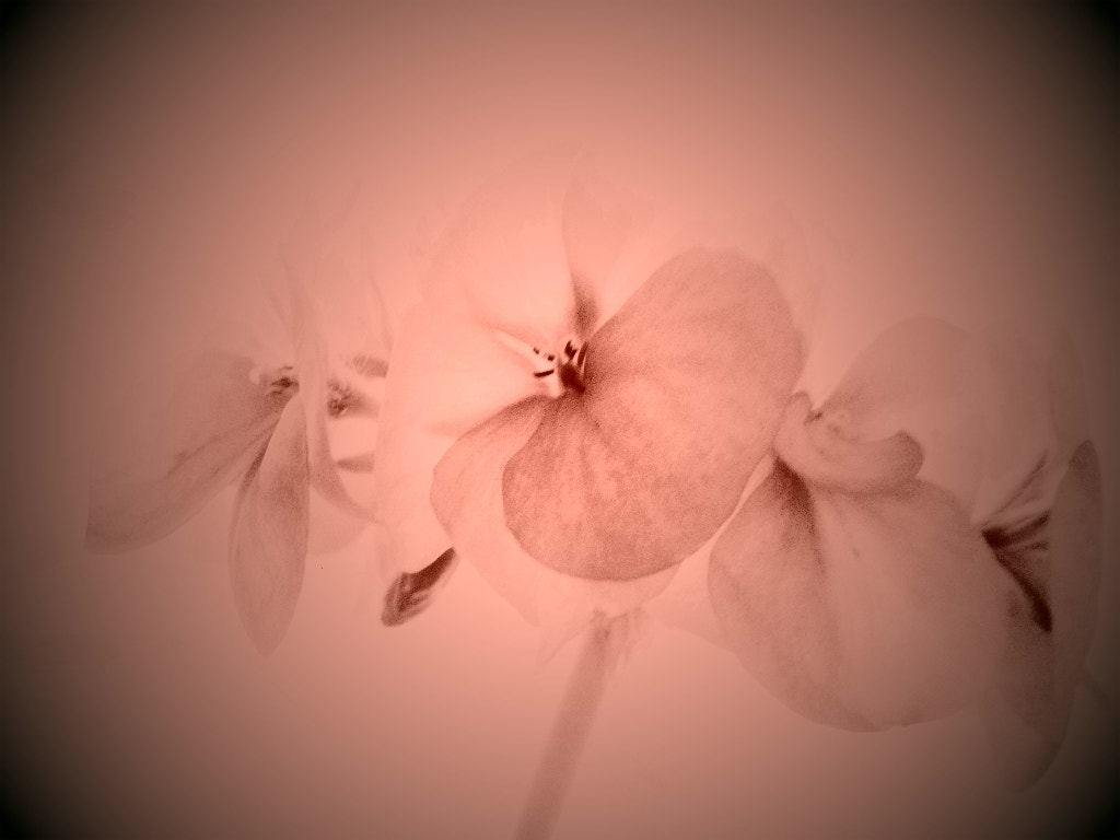 Photograph Flowers by Jaccy Gascoyne on 500px