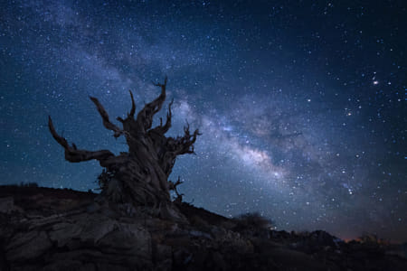 Bristlecone Pine Tree by Brian Wilson on 500px