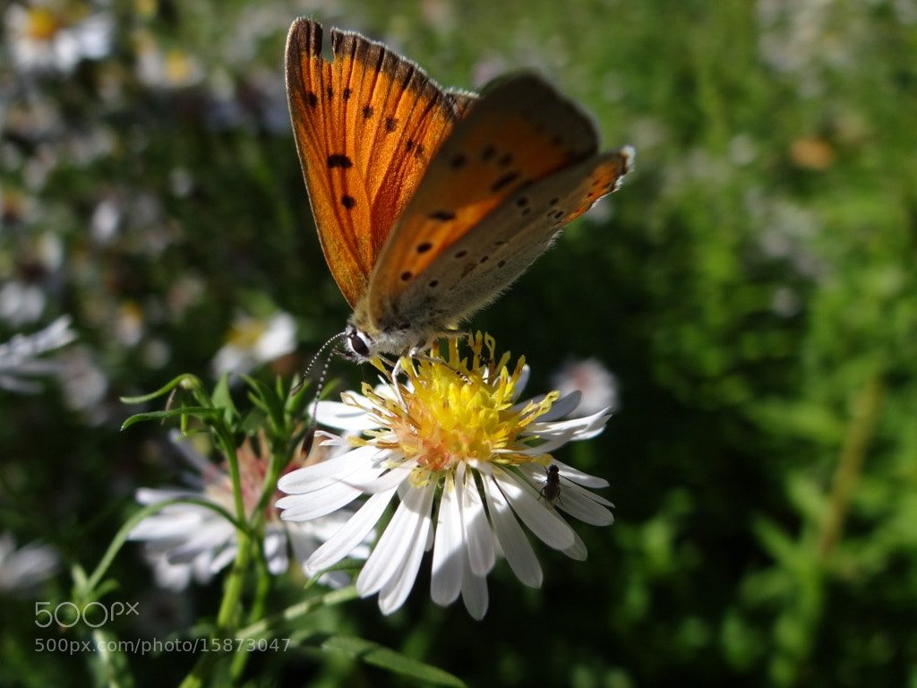 Photograph Butterfly by Игорь Орлов on 500px