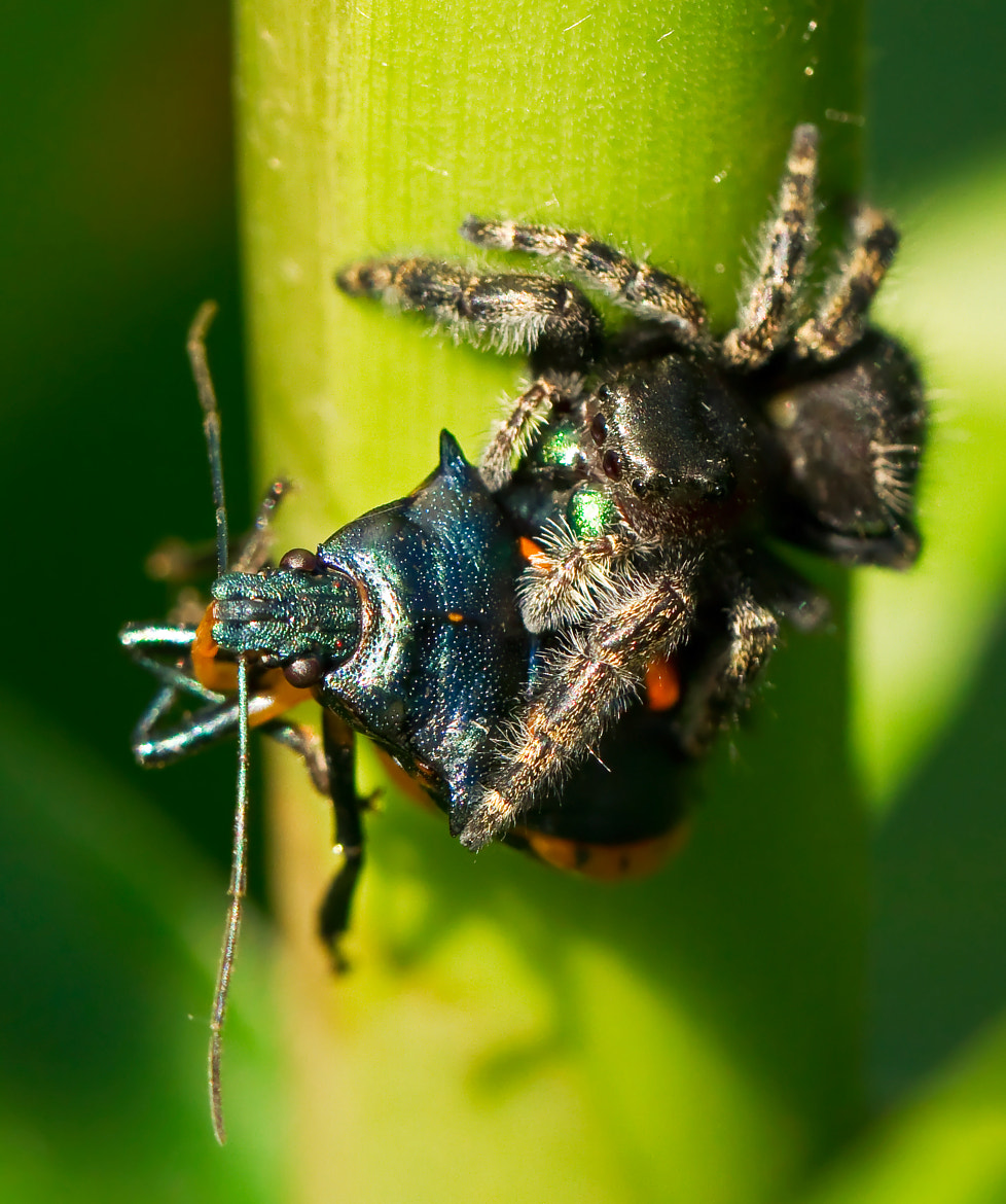 Photograph Spider's Big Catch by Lorraine Hudgins on 500px