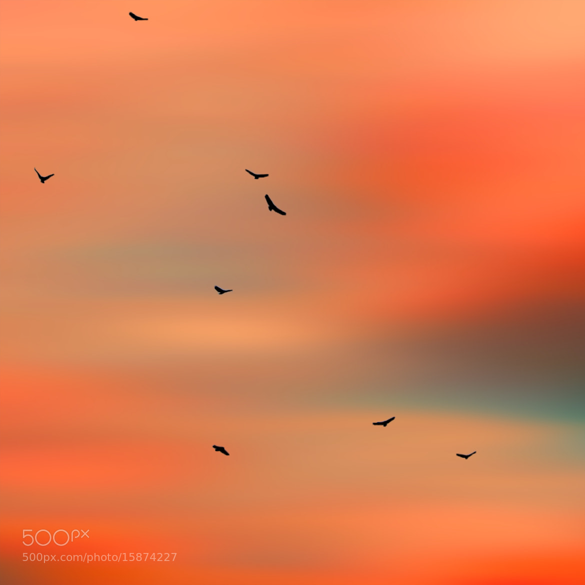 Photograph VulturesAtSunset2 by Coolor Foto on 500px