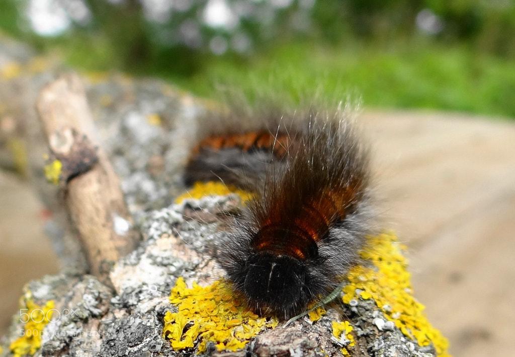Photograph Caterpillar by Игорь Орлов on 500px