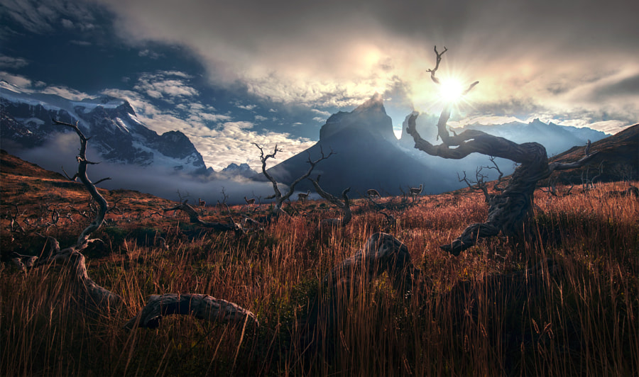 Between the Wild by Max Rive on 500px.com