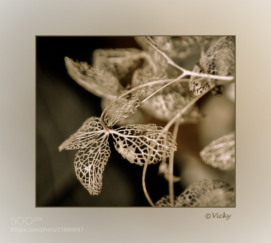 Photograph lace from  nature by Vicky Dens on 500px